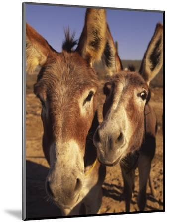 Burros, Cabo San Lucas, Baja California, Mexico-Douglas Peebles-Mounted Photographic Print