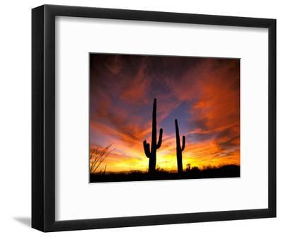Saguaro Cactus at Sunset, Sonoran Desert, Arizona, USA-Marilyn Parver-Framed Photographic Print