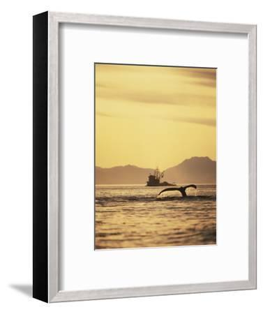 View of Humpback Whale Tail and Fishing Boat, Inside Passage, Alaska, USA-Stuart Westmoreland-Framed Photographic Print
