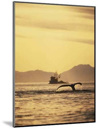 View of Humpback Whale Tail and Fishing Boat, Inside Passage, Alaska, USA-Stuart Westmoreland-Mounted Photographic Print
