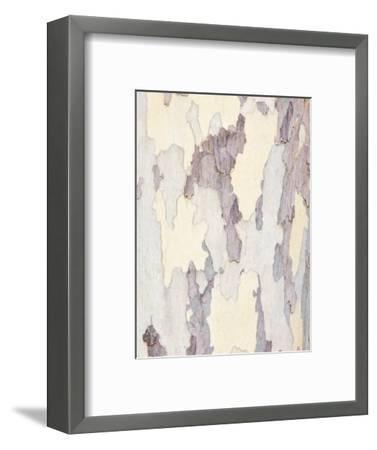 Sycamore Trunk Detail, Sedona, Arizona, USA-Rob Tilley-Framed Photographic Print