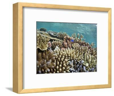 Scuba Diving, Fiji-Douglas Peebles-Framed Photographic Print