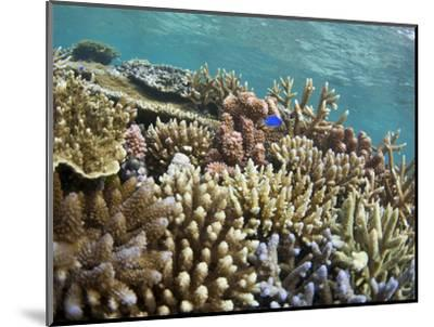 Scuba Diving, Fiji-Douglas Peebles-Mounted Photographic Print
