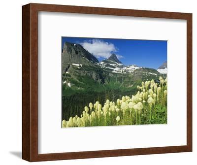 Beargrass Near Logan Pass in Gacier National Park, Montana, Usa-Chuck Haney-Framed Photographic Print