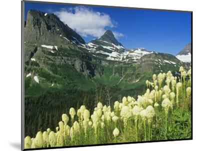 Beargrass Near Logan Pass in Gacier National Park, Montana, Usa-Chuck Haney-Mounted Photographic Print