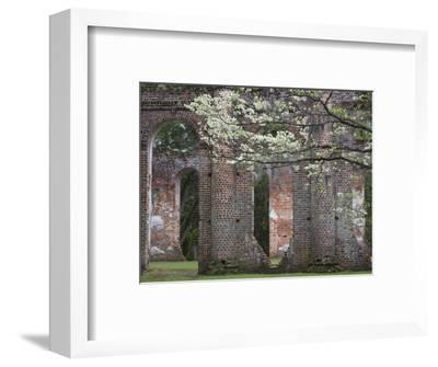 Ruins in the Spring of Old Sheldon Church, South Carolina, Usa-Joanne Wells-Framed Photographic Print