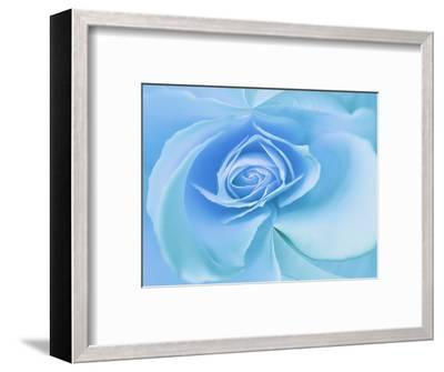 Close-Up of a Blue Rose-Adam Jones-Framed Photographic Print