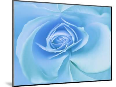 Close-Up of a Blue Rose-Adam Jones-Mounted Photographic Print