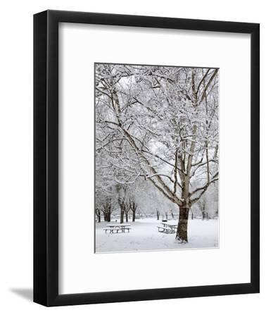 Lake Sammamish State Park, Issaquah, Washington, Usa-Jamie & Judy Wild-Framed Photographic Print