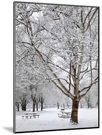 Lake Sammamish State Park, Issaquah, Washington, Usa-Jamie & Judy Wild-Mounted Photographic Print