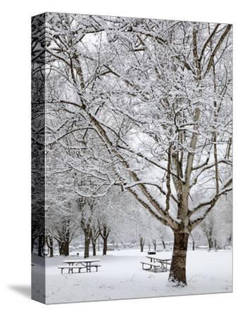 Lake Sammamish State Park, Issaquah, Washington, Usa-Jamie & Judy Wild-Stretched Canvas Print