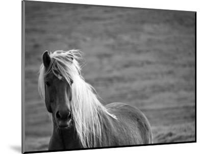 Islandic Horse with Flowing Light Colored Mane, Iceland-Joan Loeken-Mounted Photographic Print