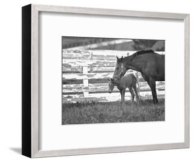 Female Thoroughbred and Foal, Donamire Horse Farm, Lexington, Kentucky-Adam Jones-Framed Photographic Print