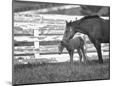 Female Thoroughbred and Foal, Donamire Horse Farm, Lexington, Kentucky-Adam Jones-Mounted Photographic Print
