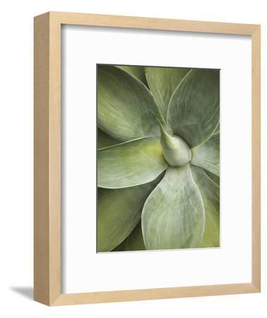 Agave Cactus, Longwood Gardens, Pennsylvania, Usa-Adam Jones-Framed Photographic Print