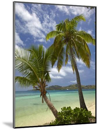Beach and Palm Trees, Plantation Island Resort, Malolo Lailai Island, Mamanuca Islands, Fiji-David Wall-Mounted Photographic Print
