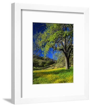 Oaks and Flowers, California, USA-John Alves-Framed Photographic Print