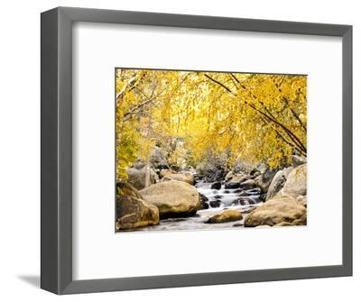 Fall Foliage at Creek, Eastern Sierra Foothills, California, USA-Tom Norring-Framed Photographic Print