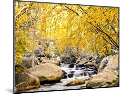 Fall Foliage at Creek, Eastern Sierra Foothills, California, USA-Tom Norring-Mounted Photographic Print