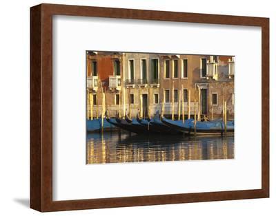 Gondolas Along the Grand Canal in Venice, Italy-David Noyes-Framed Photographic Print