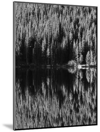 Lodgepole Pines Along Bear Lake, Rocky Mountains National Park, Colorado, USA-Adam Jones-Mounted Photographic Print