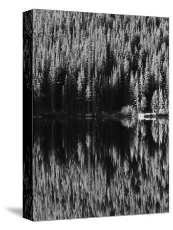 Lodgepole Pines Along Bear Lake, Rocky Mountains National Park, Colorado, USA-Adam Jones-Stretched Canvas Print