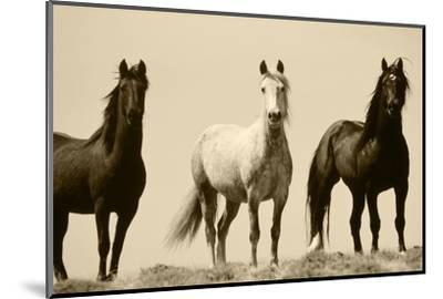 Wild Stallion Horses, Alkali Creek, Cyclone Rim, Continental Divide, Wyoming, USA-Scott T^ Smith-Mounted Photographic Print