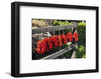 Red Hungarian Hot Chili Locally known as Paprika, Kalocsa, Hungary-Martin Zwick-Framed Photographic Print