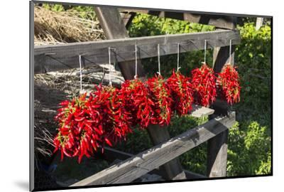 Red Hungarian Hot Chili Locally known as Paprika, Kalocsa, Hungary-Martin Zwick-Mounted Photographic Print