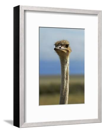 Ostrich, Etosha National Park, Namibia-David Wall-Framed Photographic Print