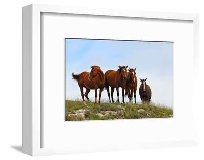 Four Horses, Kansas, USA-Michael Scheufler-Framed Photographic Print