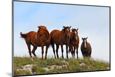 Four Horses, Kansas, USA-Michael Scheufler-Mounted Photographic Print