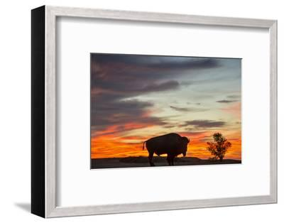 Bison Bull Silhouette, Theodore Roosevelt NP, North Dakota, USA-Chuck Haney-Framed Photographic Print