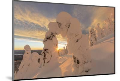 Snow Ghosts in the Whitefish Range, Montana, USA-Chuck Haney-Mounted Photographic Print