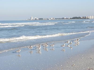 Laughing Gulls Along Crescent Beach, Sarasota, Florida, USA-Bernard Friel-Premium Photographic Print