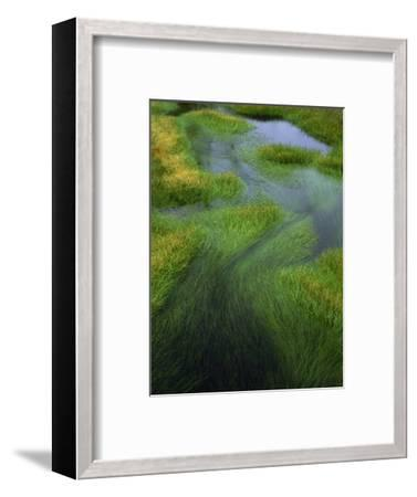 Spring Grasses in Calm Stream, Yellowstone National Park, Wyoming, USA-Jerry Ginsberg-Framed Photographic Print