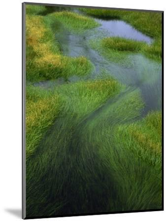 Spring Grasses in Calm Stream, Yellowstone National Park, Wyoming, USA-Jerry Ginsberg-Mounted Photographic Print