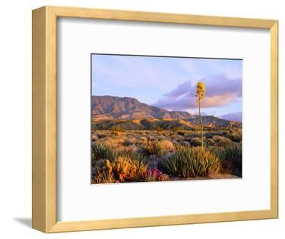 USA, California, Anza-Borrego Desert State Park. Agave Wildflowers-Jaynes Gallery-Framed Photographic Print