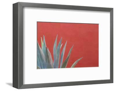 Mexico, San Miguel De Allende. Agave Plant Next to Colorful Wall-Jaynes Gallery-Framed Photographic Print