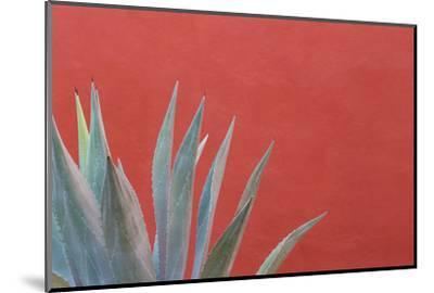 Mexico, San Miguel De Allende. Agave Plant Next to Colorful Wall-Jaynes Gallery-Mounted Photographic Print
