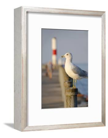 Seagull at the Lake Ontario Pier, Rochester, New York, USA-Cindy Miller Hopkins-Framed Photographic Print