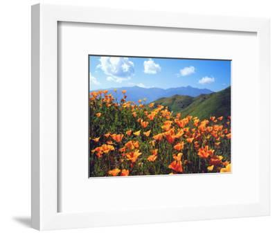 USA, California, Lake Elsinore. California Poppies Cover a Hillside-Jaynes Gallery-Framed Photographic Print