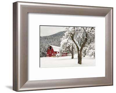 Fresh Snow on Red Barn Near Salmo, British Columbia, Canada-Chuck Haney-Framed Photographic Print