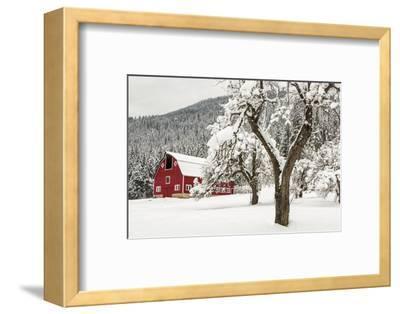 Fresh Snow on Red Barn Near Salmo, British Columbia, Canada-Chuck Haney-Framed Premium Photographic Print