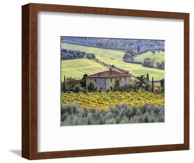 Italy, Tuscany. Vineyards and Olive Trees in Autumn by a House-Julie Eggers-Framed Premium Photographic Print