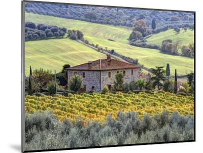 Italy, Tuscany. Vineyards and Olive Trees in Autumn by a House-Julie Eggers-Mounted Premium Photographic Print