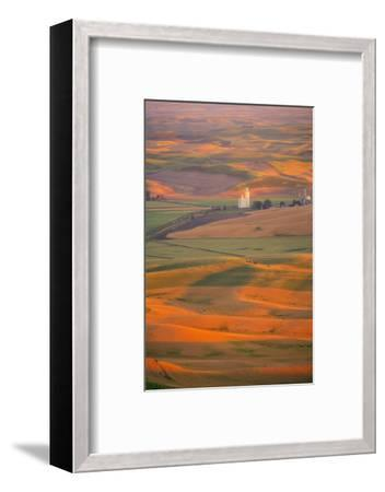 Summer Wheat, Barley and Lentil Fields, Washington, Palouse Area-Stuart Westmorland-Framed Photographic Print