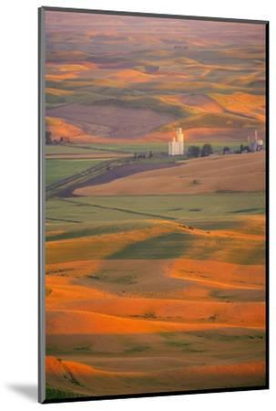 Summer Wheat, Barley and Lentil Fields, Washington, Palouse Area-Stuart Westmorland-Mounted Photographic Print