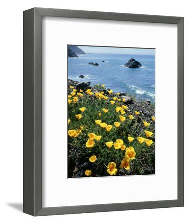 California, Big Sur Coast, Central Coast, California Poppy-Christopher Talbot Frank-Framed Photographic Print