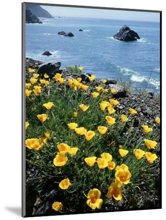 California, Big Sur Coast, Central Coast, California Poppy-Christopher Talbot Frank-Mounted Photographic Print
